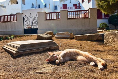 Cat relaxing in the sun, Naxos, Greece