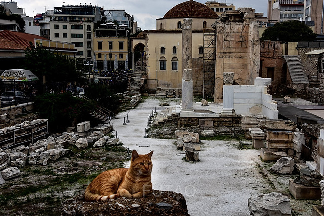 Greek cat lounging on ancient ruins, Athens, Greece