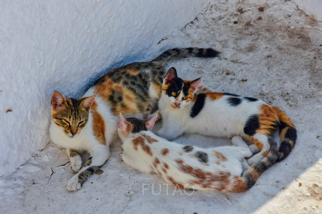 Nursing Kitty, Santorini, Greece