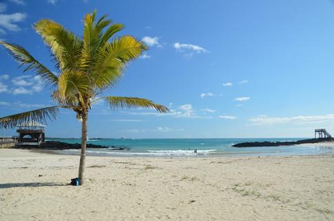 Beach, Isabela Island, Galapagos