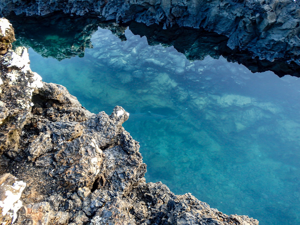 White Tipped Reef Shark on La Tintoreras, Islabela Island, Galapagos