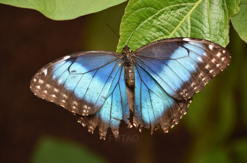 Diamante Eco Park: Butterfly Gallery