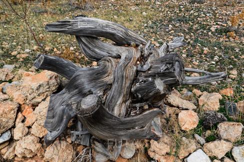 Wood Detail, the village of Sangri, Naxos, Greece