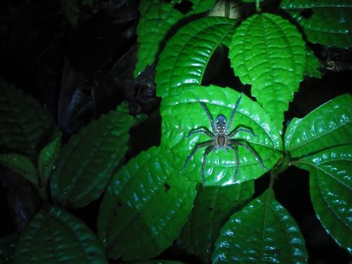 Night Walk Through a Costa Rican Rainforest