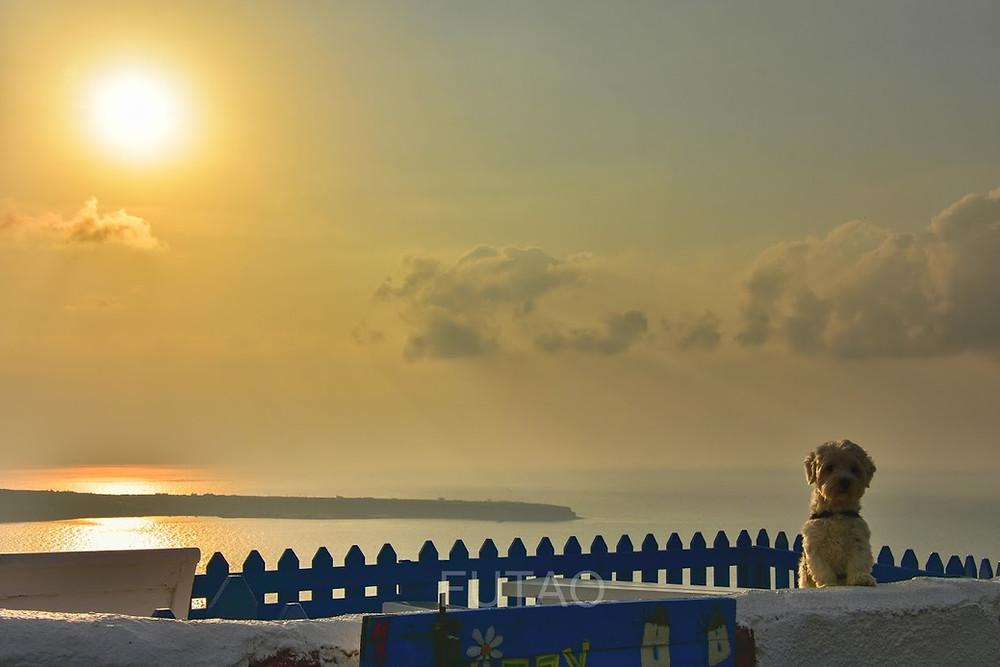 Bon Bon and the beautiful sunset near the Glitzy Windmill, Santorini, Greece
