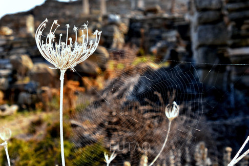 Flower closeup, Delos Greece