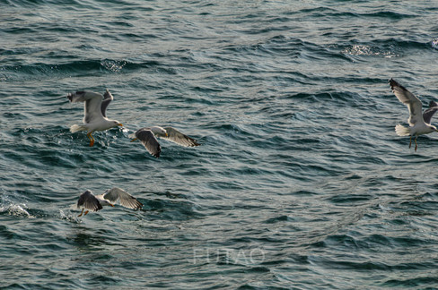 Sea Birds at Sunset, Mykonos, Greece