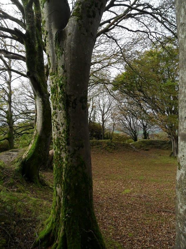 Mossy Tree, Ireland