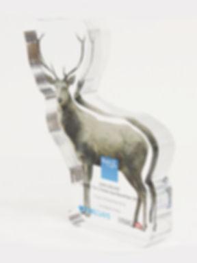 reindeer-S1-3.JPG