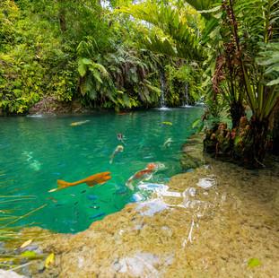 Miami's Tropical Nooks