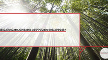 ბამბუკის ხეები კლიმატის ცვლილების წინააღმდეგ?