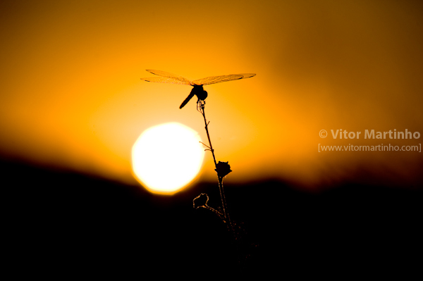 """""""Dragonfly's perspective"""""""