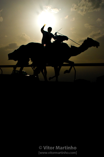 """Camel racing silhouette"""