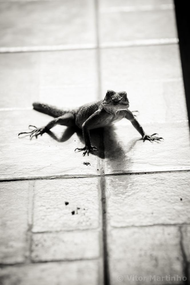 """""""Lizard"""""""