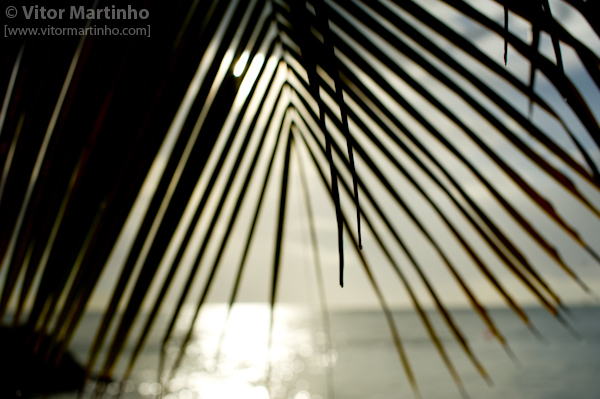 """Cortinas tropicais"""