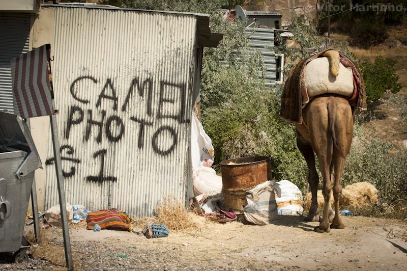 """""""Cameltalism"""""""