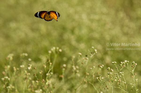"""""""Butterflying"""""""