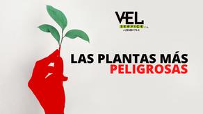 ¡INCREÍBLE! Las plantas más peligrosas del mundo