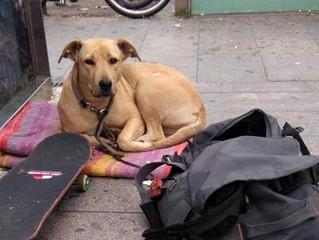 Poliziotto uccide cane di un senzatetto in pieno centro di Barcellona con un colpo di arma da fuoco