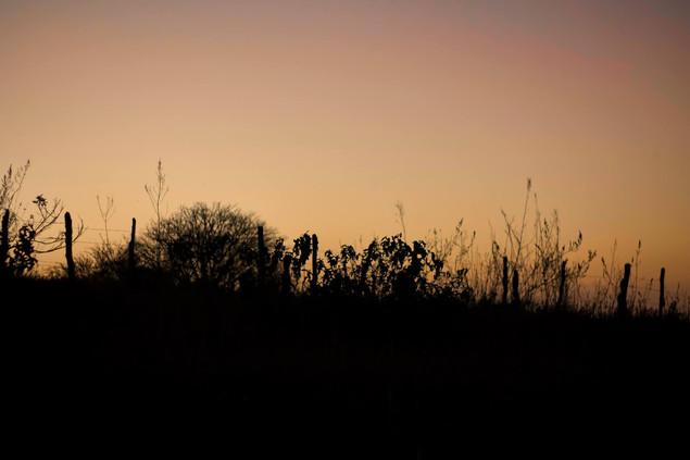 Sunset brazil.jpg