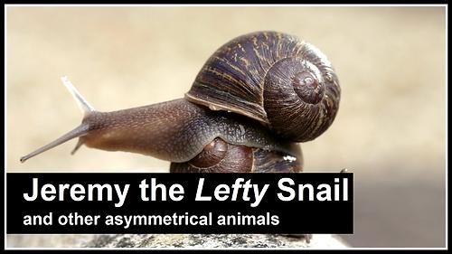 Jeremy the Lefty Snail.png