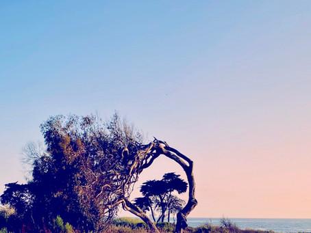 Summer Solstice Meditation 2020