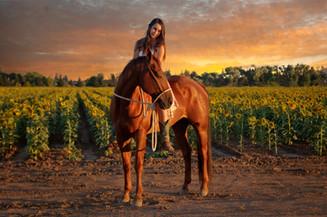 Sunset horse photography