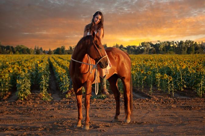 horse photographer yuba city