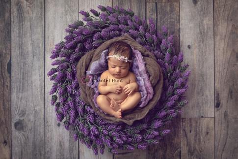 lavenderwreath2.jpg