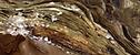 opaque-gold-ridge.png