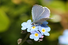 And sometimes when we see a butterly....
