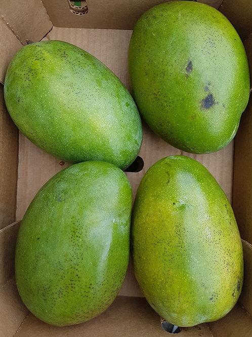 Extra large mango