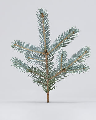 spruce-rethos_soap_18-07-20-0265-web.jpg