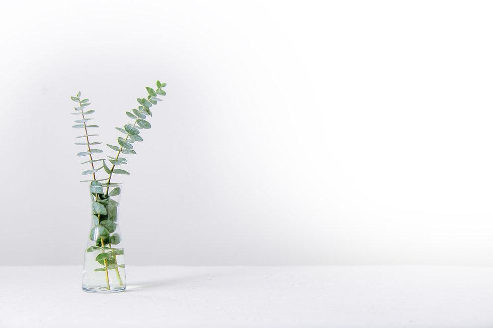 flower-bg.jpg