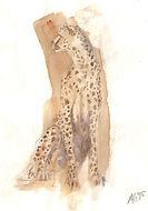 cheetah, jacht luipaard, aquarel,  illustratie, illustration
