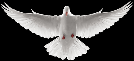 cropped Dove.png