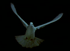 cropped blue dove_edited_edited.png