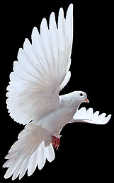 NEW DOVE_edited.png