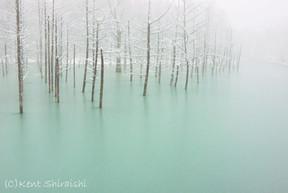 © Kent Shiraishi