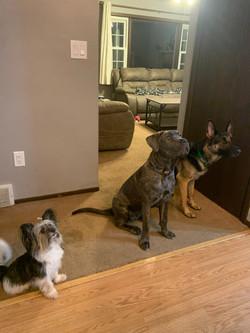 Gizmo, Gator, and Nala