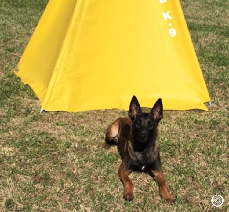 The Combo Obedience Course