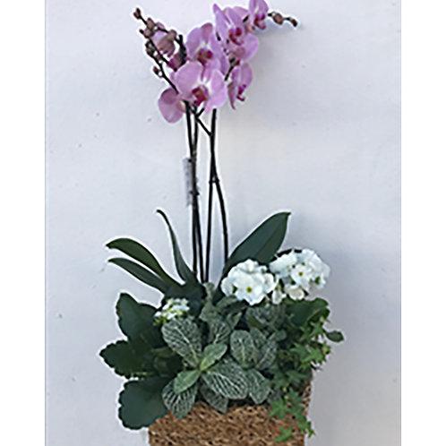 Plant & Orchid Basket