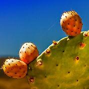 cactus-4257285_1920_edited.jpg