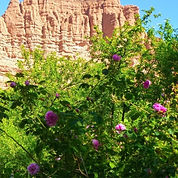 vallee-des-roses-maroc 2.jpg