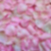 rose-petals-3194062_1920_edited.jpg