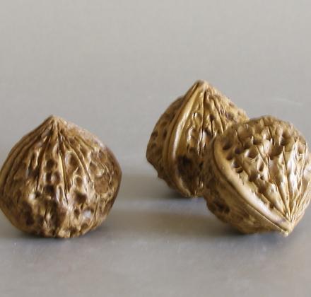 Clay Walnut (L)