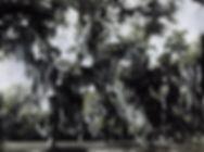 San Jac Texians Camp Colored 300 dpi.jpg