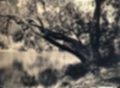 River tree iPic-300.jpg