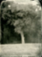 Wilbarger tree-sm.jpg