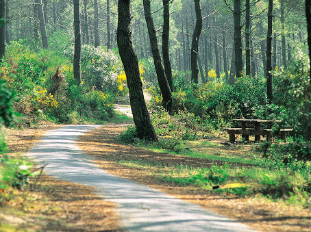 9 itinéraires en forêt en trottinette électrique